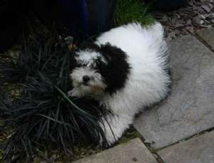 pup 1 for Geraldine