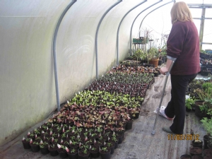 500 plants