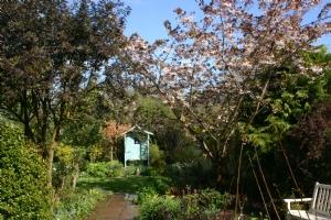 Part of front garden today
