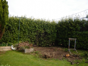 pics  of garden work in progress