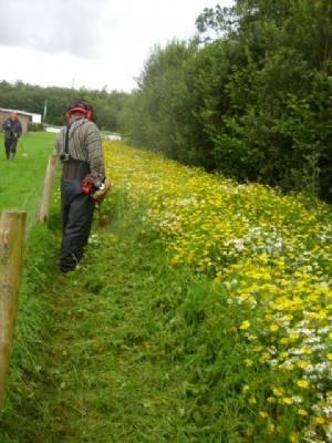 Wildflower Meadow.