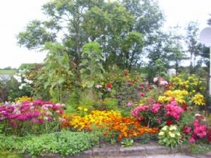 My Mother's front garden.