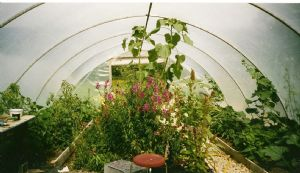 small polytunnel summer 09