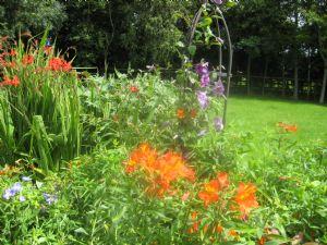clematis side garden