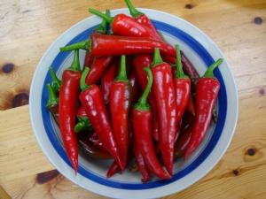 Cayenne chili