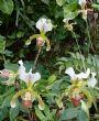 Loro Park Orchid Area