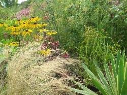 Rudbeckia, Stipa & Carex intumescens
