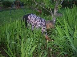 unflattering photo of me weeding : )