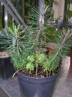 Euphorbia Help Please