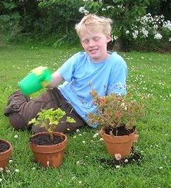 Sammy, potting pelargoniums