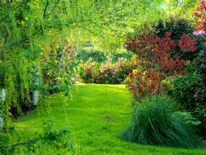 Laburnum & Camellia