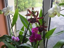 orchids in flower now