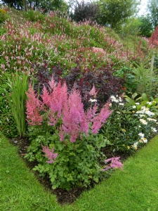 Good Year For Astilbe
