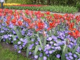 Favourite Tulip Display