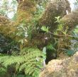 ferns and baby orchid