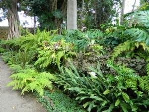 Ferns in El Botanico, Tenerife