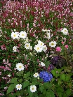 Anemone, Rose, Persicaria & Hydrangea