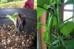 seedling & plant
