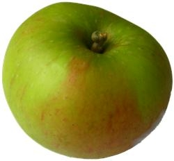 cooking apple (from web)