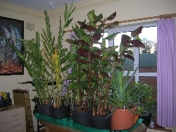 some plants overwintering indoors