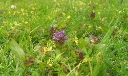 Wexford Lawn