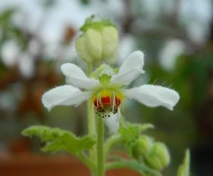 Sweet Little Plant
