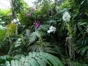 More Orchid Gardens