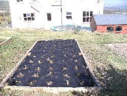 Our Strawberry Bed