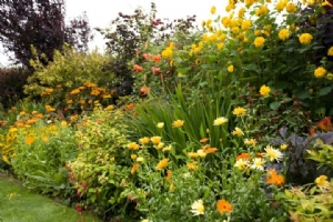 Bay Garden, Hot Border, September
