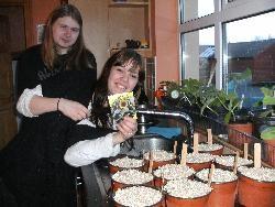 Little Dorrit pots headed for the greenhouse