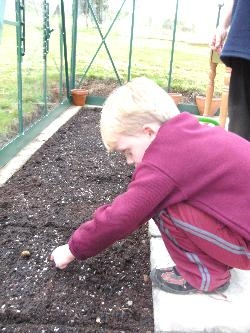 Sam Planting Radishes
