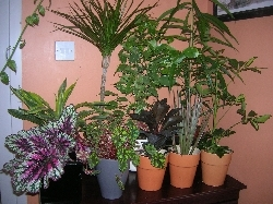 Ishtar's Garden