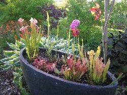 Bog Garden Complete