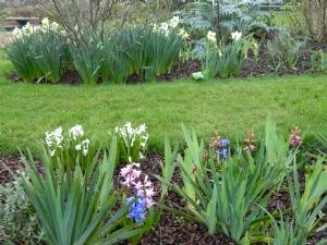 daffs & hyacinths