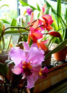 Few Orchids