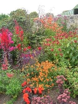 Altamont, red end of herbaceous border