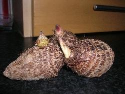 edible taro tubers