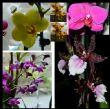 in flower 25.1.12