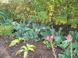 Mass Planting