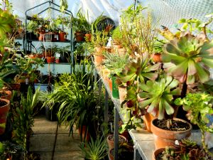 Tidying the Greenhouse
