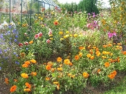 annuals border beside greenhouse