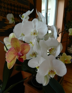 phals from yesterday