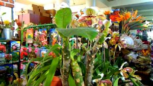 Exciting Plants at Madeiran Market