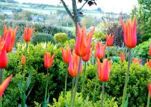 Tulip  Update