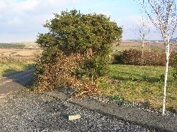 Goodbye to my Hedge