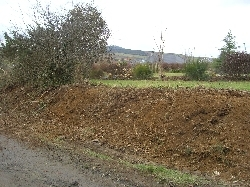 hedge half gone (from road)