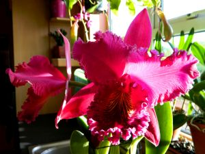 Blc Chia Lin 'New City'