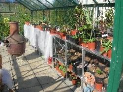 seedlings under shade in glasshouse