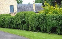 Follie of a Hedge (photo from net)