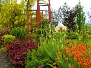 Here Come the Irises